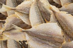 Salty dried fish to beer Royalty Free Stock Photos