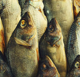 Salty dry river fish Royalty Free Stock Images