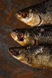Salty dry river fish. Dried fish. Salty dry river fish on a rusty metal plate background Stock Photography