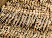 Salty fish Stock Photos