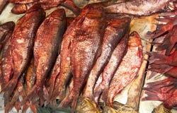 Salty fish. At market display Royalty Free Stock Image