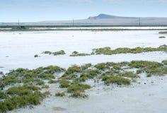Salty lake Royalty Free Stock Image