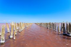 The salty lake with pink water and the beach from salt. Old logs pier on Lake Sasyk in the Crimea.  Royalty Free Stock Image