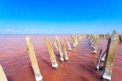 The salty lake with pink water and the beach from salt. Old logs pier on Lake Sasyk in the Crimea.  Royalty Free Stock Photo