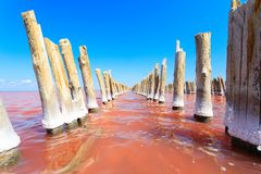 The salty lake with pink water and the beach from salt. Old logs pier on Lake Sasyk in the Crimea.  Stock Image