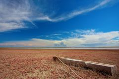 Salty land. Salty dry soil in steppe Royalty Free Stock Photography