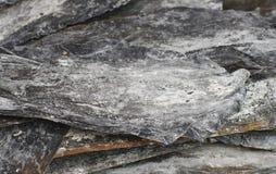 Salty leaf dry kelp closeup Stock Photography
