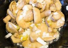 Salty mushrooms Royalty Free Stock Photos