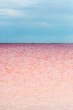 Salty pink lake Stock Photography