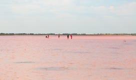 Salty pink lake Stock Images