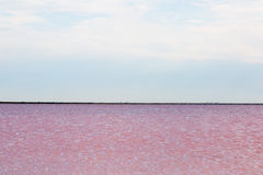Salty pink lake Royalty Free Stock Images