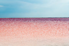 Salty pink lake Stock Photos