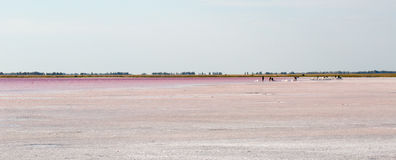 Salty pink lake Royalty Free Stock Image
