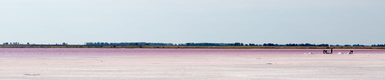 Salty pink lake Stock Image