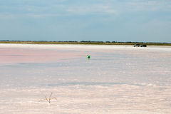 Salty pink lake Stock Images