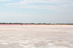 Salty pink lake Royalty Free Stock Photo