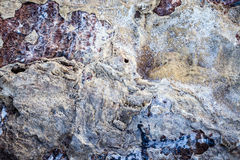 Salty Rocks Surface Texture Background Stock Photography