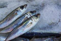 Salty Sardines Stock Photography