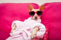 Salud del balneario del perro imagenes de archivo