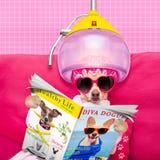 Salud del balneario del perro fotografía de archivo libre de regalías