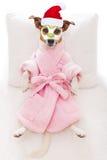 Salud del balneario del perro en la Navidad como Papá Noel Imagen de archivo