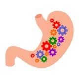 Salud del estómago Foto de archivo