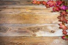 Saludo de la acción de gracias con las hojas de arce vivas de la caída en el wo rústico Foto de archivo libre de regalías