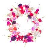 Saludo de la guirnalda de la flor fucsia colorida con el lugar para su t Imágenes de archivo libres de regalías
