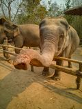 Saludo del elefante fotografía de archivo