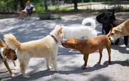 Saludos del parque del perro imagenes de archivo
