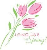 Salutation de carte avec le début du ressort ; bouquet rose de tulipes Images stock