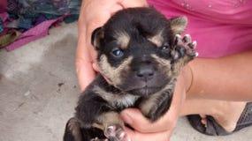 Salutation de chien noir Photos libres de droits