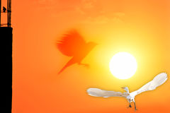 Salutation de coucher du soleil Images stock
