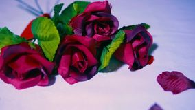 Salutation du Saint Valentin avec la longueur de la rose banque de vidéos
