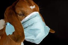 Salute degli animali Fotografie Stock Libere da Diritti