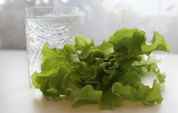 Salute e cibo, warter ed insalata sani Fotografia Stock