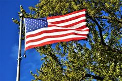 Salute the Flag. American flag unfurled and blowing in the wind against blue sky and tree Royalty Free Stock Images