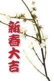 Saluti e fiore della prugna Fotografia Stock