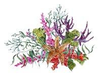 Saluto d'annata di vita di mare dell'acquerello di estate misera Fotografia Stock