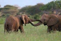 Saluto dell'elefante Immagini Stock
