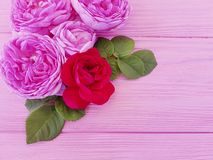 Saluto di legno della tavola del fondo di rosa della struttura di estate del fiore del fiore di Rosa immagini stock libere da diritti