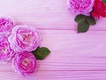 Saluto di legno rosa della tavola del fondo di estate del fiore del fiore di Rosa fotografia stock