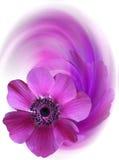 Saluto floreale Fotografia Stock Libera da Diritti