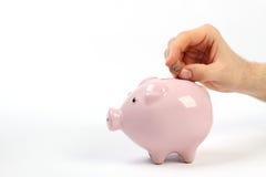 Salvadanaio del porcellino salvadanaio con l'euro centesimo che cade nella scanalatura Immagini Stock