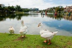Salvador DA Bahía Foto de archivo libre de regalías