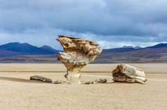 Salvador Dali rock tree in the High Andean Plateau, Bolivia Stock Image