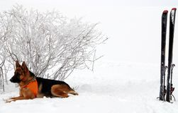Salvador del perro Imagen de archivo