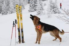 Salvador do serviço de salvamento da montanha na cruz vermelha búlgara Imagens de Stock Royalty Free