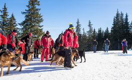 Salvadores do serviço de salvamento da montanha com cães do salvamento Foto de Stock Royalty Free