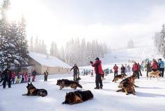 Salvadores do serviço de salvamento da montanha com cães do salvamento Fotos de Stock Royalty Free